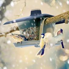 Vogelvoederhuisje 'Multi' - Hangt veilig in de boom. Staat perfect aan de balustrade van het balkon.