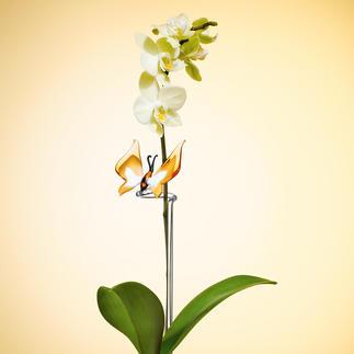 Kolibriestaaf of Vlinderstaaf voor orchideeën Ondersteunt en geeft goede stabiliteit. Altijd mooi en onderhoudsvriendelijk.