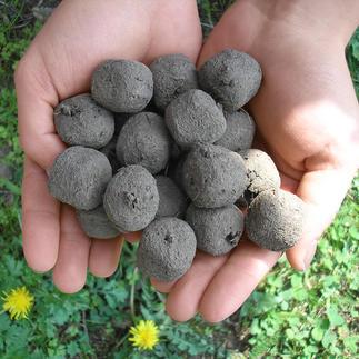 Set zaadbommen Uit één enkele bol komen wel 25 inheemse grassen, bloemen, kruiden …