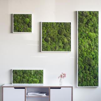 Bolmos-wanddecoratie Echt mos – een blikvanger voor aan de wand. Innovatieve conservering: 100 % natuurlijk – 0 % verzorging.