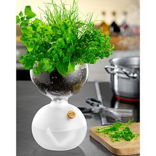 Design-plantenglas Dit plantenglas in bekroond design laat kruiden etc. niet uitdrogen.