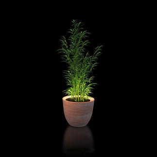 Verlichtingsring voor planten Met deze led-verlichtingsring zet je jouw planten effectvol in de schijnwerpers.