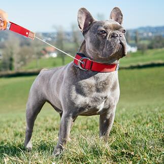 2-in-1 halsband met lijn Nieuwste generatie hondenriem: voortaan draagt uw hond de lijn zelf. Ontwikkeld in Duitsland.