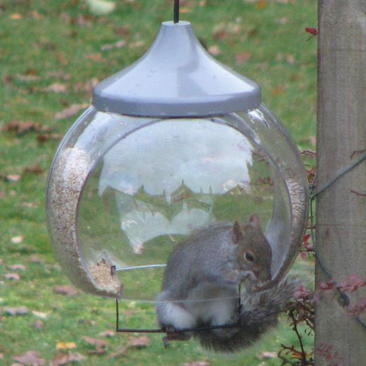 """""""Hallo, Ik dacht dat u uw vogelvoerhuisje graag """"in actie"""" zou willen zien. Ik heb de zitstang erin gehangen en kijk eens wie er snel achter kwam waar deze voor dient – zelfs veel vroeger dan de vogels.(...) Een fantastisch product. Met vriendelijke groeten,  Malcolm H., Groot-Brittannië, 22.11.2010"""""""